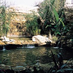 Bassin avec une cascade.